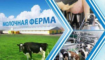 Молочная ферма.