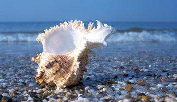 Мечтаем увидеть море!