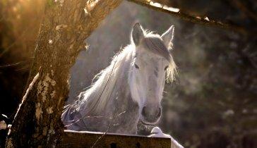 На постой коня и ветеринара