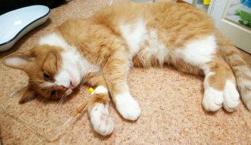 На лечение бездомного котика Персика