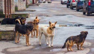 На корм для собак