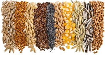 Business investment. Purchase of grain (agricultural trader)
