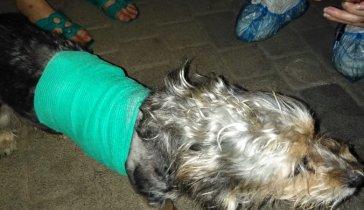 Помогите собрать деньги на лечение собаки