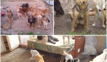 Небольшой приют для бездомных животных просит помощи!