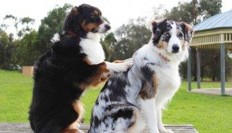 Как организовать сбор денег на лечение животных — главные нюансы