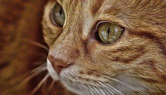 Как собрать деньги на лечение кота — только эффективные решения