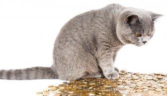 Прошу помощи у богатых, но никто не дает — ТОП-5 причин